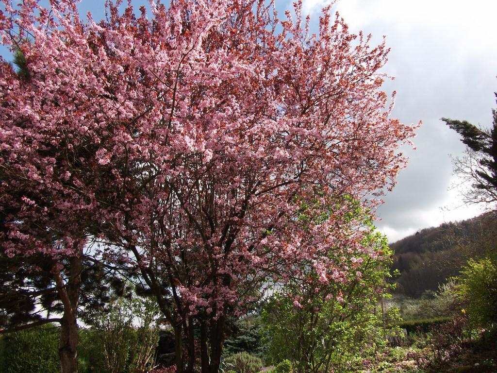 Les Côtes de Meuse au printemps