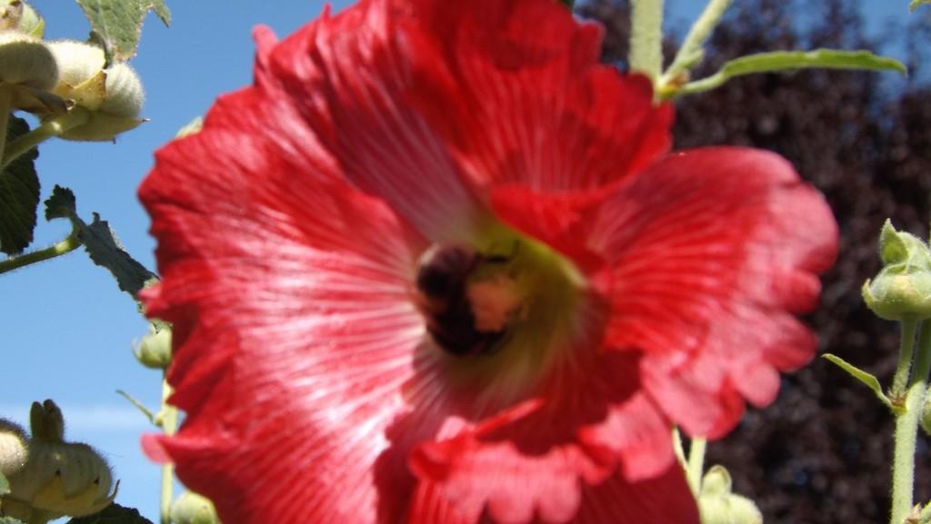 Pleins de fleurs dans le jardin à Thillot
