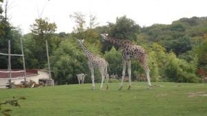 Zoo d'Amnéville près des gîtes de Thillot en meuse
