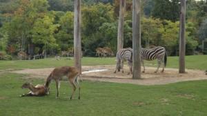 Zoo d'Amnéville en lorraine