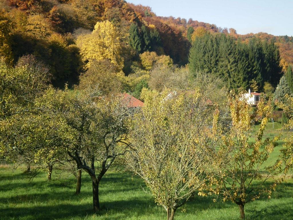 Les côtes de Meuse à l'automne